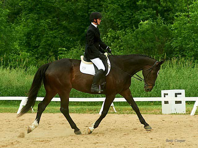 Donatello Dressage